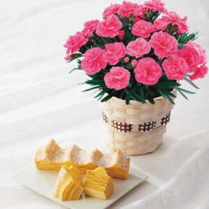 カーネーション鉢植え「オスカーピンク」4号×ねんりん家